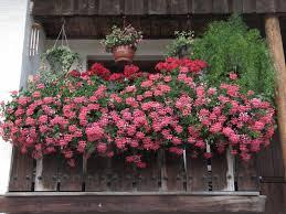 Blumen Fensterbank Blumen Auf Fensterbank Fensterbank Dekoration