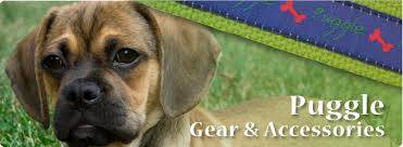 black and brown puggle.  Brown Puggle Gifts Products Gear U0026 Accessories In Black And Brown 0