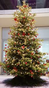 office christmas trees. Incredible Office Christmas Tree Tittle Trees I