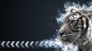 tiger vector graphic 1366x768
