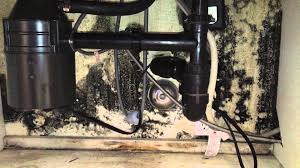 Black Mold In Kitchen Mold Why You Should Look Under Sinks Often Youtube