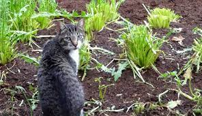 5 ways to keep cats out of your garden