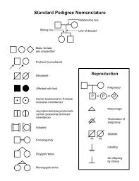 Pedigree Chart Explanation Definition Of Pedigree Nci Dictionary Of Genetics Terms