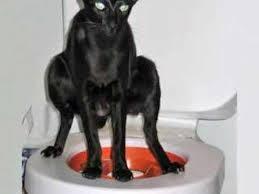 <b>Litter Kwitter</b> - оригинальная система для приучения кошки к ...