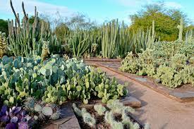 desert botanical garden phoenix arizona a cactus paradise there s also a
