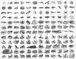 Linnaean Classification System Scientific Names