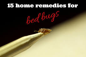 Bed Bugs In Bathroom Gorgeous Effective Home Remedies For Bed Bugs FULL GUIDE