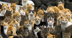 the croydon cat is believed to be behind as many as 250 feline