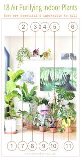 check out our gorgeous indoor garden with 18 best indoor plants plus 5 essential tips