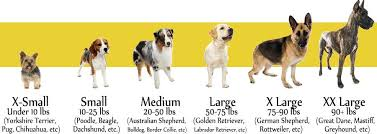 dog breed size chart simi valley dog fencing vinyl concepts