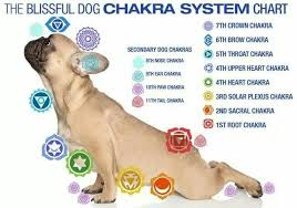 Animal Chakra Chart Here Is A Dog Chakra Chart It Is Useful To Know Where