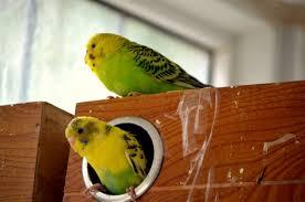 bird family free stock photo public