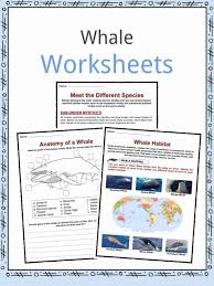 Whale Classification Chart Whale Facts Worksheets Species Diet Information For Kids