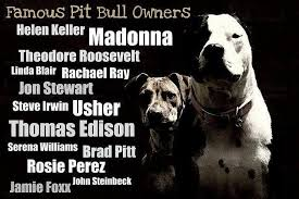 Pitbull Quotes 94 Inspiration Pit Bull Positive Quotes QuotesGram Animal Pinterest Pit Bull