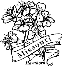 Small Picture State Flower Coloring Pages Flower Coloring Page