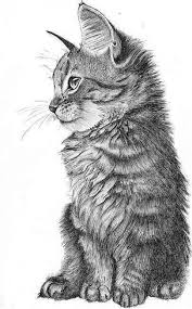 realistic cat drawing in pencil. Wonderful Pencil Cat Drawing To Realistic Drawing In Pencil N