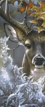 34 Manuel ideas | animals beautiful, animals, pet birds