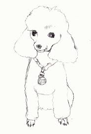 Small Picture Dog Breed Coloring Pages Poodle Printable Page Animal Free Skirt