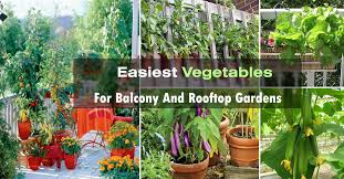 easy container vegetables for balcony rooftop garden container vegetable gardening