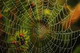 Spider Web Identification Chart The Different Types Of Spider Webs Terminix