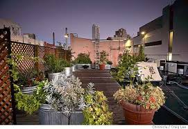 overall view of the rooftop fruit and vegetable garden above the food and wine dept