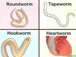 Dog Worm Identification Chart Identify Different Dog Worms Worms In Dogs Different Dogs