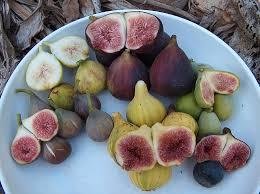 Serious Green How To Get Free Fruit Via Urban Fruit Harvesting Southern California Fruit Trees