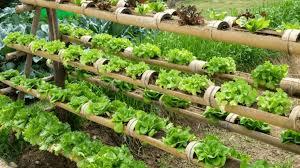 best vertical vegetable garden ideas