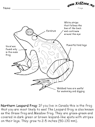 Parts Of A Frog Frog Activity Sheet Labeling A Northern Leopard Frog Easy