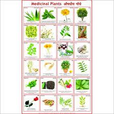 Plants Name Chart
