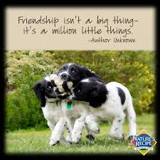 Quotes About Pets And Friendship