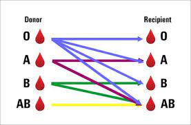 what is the most mon blood type