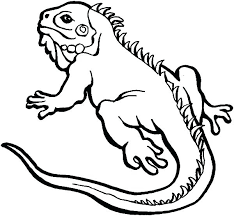 Chameleon Coloring Page Marker Pages Chameleons Tr Lizard Horned P