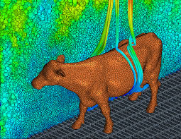 computational fluid dynamics. temperature field and buoyancy flow around a cow (© thünen-institut) computational fluid dynamics