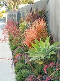 drought resistant garden. Landscaping · Modern Drought Tolerant Garden! Resistant Garden R