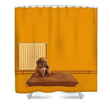 dachshund shower curtain dachshund shower curtains fine art