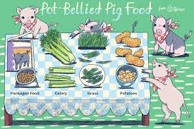 Mazuri Elder Pig Food Feeding Chart What Do Pot Bellied Pigs Eat