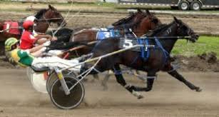 Image result for trotting races