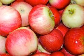 early cortland apples mercer island farmers market akane apples from tonnemaker family orchards at the mercer island farmers market on 18