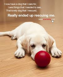 Rescue Dog Quotes Impressive 48 Rescue Quotes 48 QuotePrism