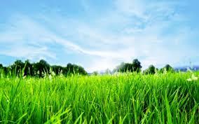 green grass blue sky. Unique Green Blue Sky Green Grass On L