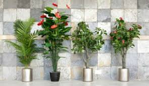 office greenery. Visual Benefits Of Office Plants Greenery