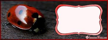 Ladybug Invitations Template Free Ladybug Invitation Templates Free Download Invitation World