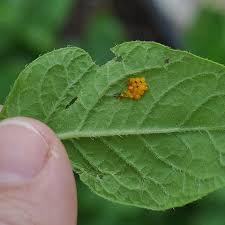 Directory Of Garden Pests And Diseases Gardeners Supply