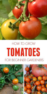Tomatoes 101 A Quick Start Guide For Beginners Empress Of
