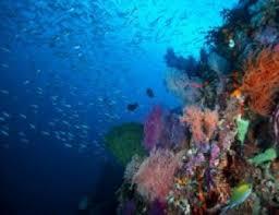 Marine Science Technician Aquatic Marine Science Scholarships For International
