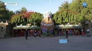 Gaziantep Hayvanat Bahçesine Normalleşme Sonrası Büyük İlgi