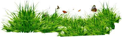 grass png. Interesting Grass Grass Png Image Green PNG Picture For Grass Png S