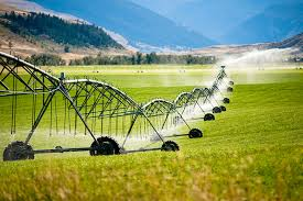 Are Crops Irrigated With Wastewater Safe To Eat