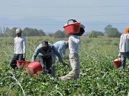 Risultati immagini per migranti agricoltura latina